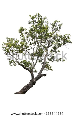 Beautifull green tree on a white background - stock photo