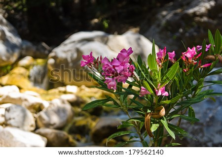 Beautifull plants and flowers are growing all around Samaria gorge, central part of Crete island, Greece - stock photo