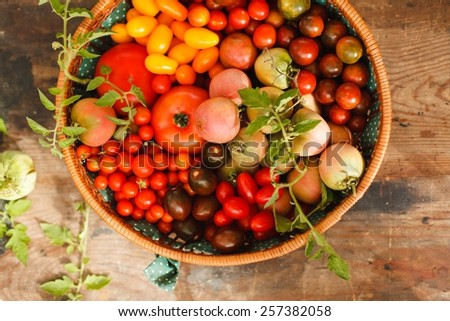 Beautifully arranged red, green and yellow tomatoes  on  rustic backed taken from above on vintage wooden table. Natural food from  garden . Authentic food concept. Rustic style - stock photo