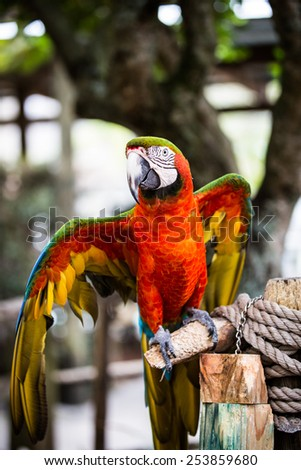Beautifully colored parrot - stock photo