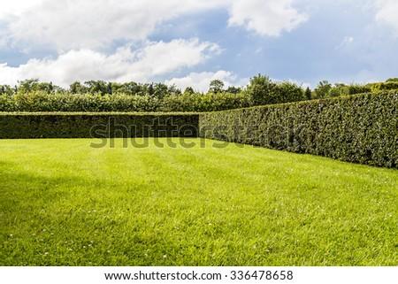 Beautifully manicured garden bushes - stock photo