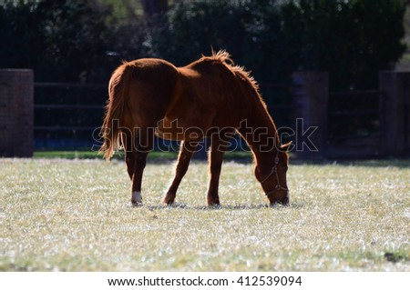 Beautify horse grazing in the green grass fields  - stock photo