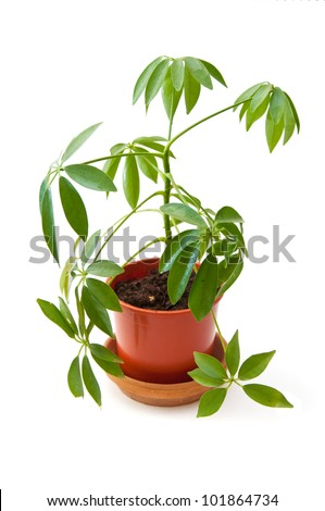 Beauttiful green plant in a small plastic pot - stock photo