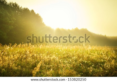 Beauttiful stirring forest and field scene with layers of mist  - stock photo