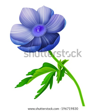 Beauty anemone summer flower card