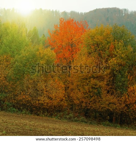 Beauty autumn forest landscape and meadow field with leaves - stock photo