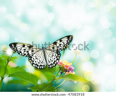 beauty butterfly on leaf. small DOF - stock photo