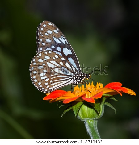 Beauty butterfly thailand Closeup butterfly on flower butterfly butterfly  butterfly asia