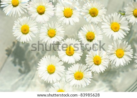 beauty chamomile flowers in aromatherapy bowl