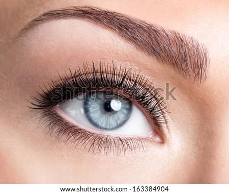 Beauty female blue eye with curl long false eyelashes - macro shot over white background - stock photo