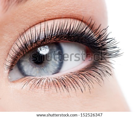 Beauty female eye with curl long false eyelashes - macro shot over white background