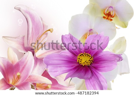 Beauty flowers background