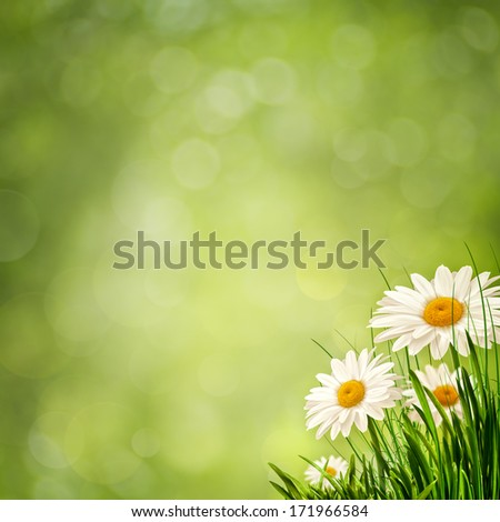 Beauty flowers on the meadow, abstract eco backgrounds