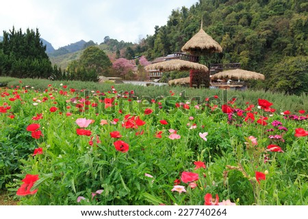 beauty garden scene with many color plants - stock photo