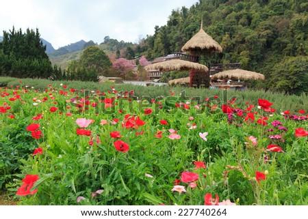 beauty garden scene with many color plants - stock photo
