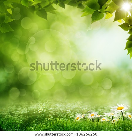 Beauty morning in the green forest, eco backgrounds - stock photo