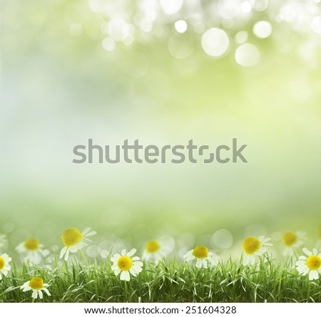 Beauty natural spring background with daisies. Boke - stock photo