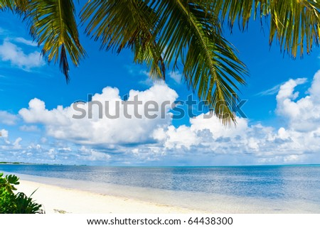 Beauty Ocean Palm - stock photo