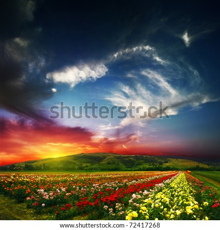 beauty of colorful nature - stock photo