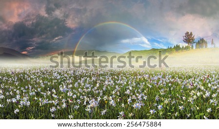 Beauty panorama of mountain alpine meadows in Transcarpathia - is the abundance of vegetation on the background of beautiful tops and interesting weather conditions. Beauty rainbow during a storm - stock photo