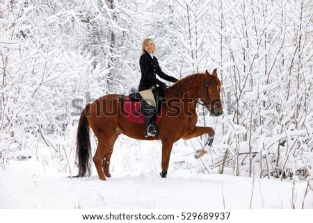 Beauty rider on the horse at beautiful winter snowy fores