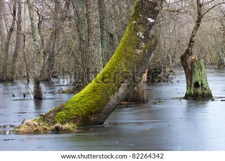 beauty scene of marshes - stock photo