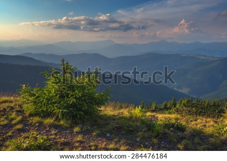Beauty summer day in the Carpathian mountains with green fir tree. Marmarosu ridge, Ukraine, Europe.  - stock photo