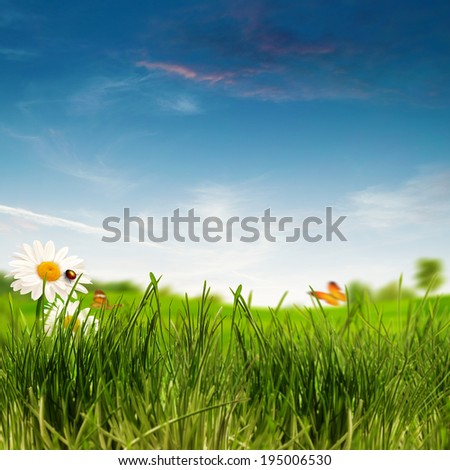 Beauty summer day on the meadow, environmental backgrounds - stock photo