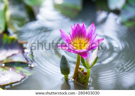 Beauty water and lotus flower - stock photo