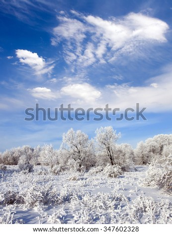 Beauty winter forest. Trees in snow. Blue sky and white clouds. Frosty day - stock photo