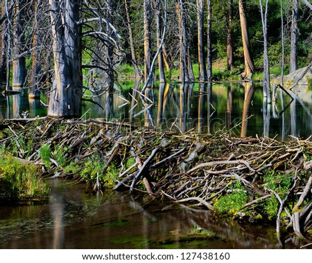Beaver Dam and Pond, Eastern Sierra, California - stock photo
