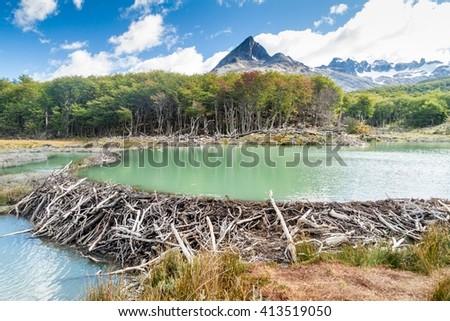 Beaver dam at Tierra del Fuego, Argentina - stock photo