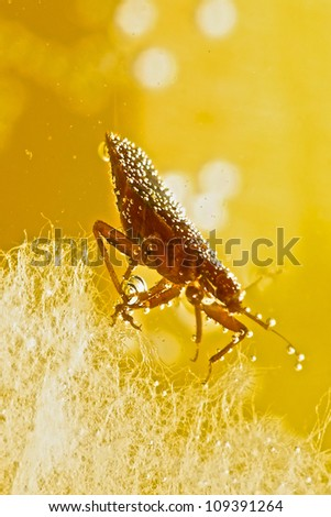 Bed Bug in Water - stock photo