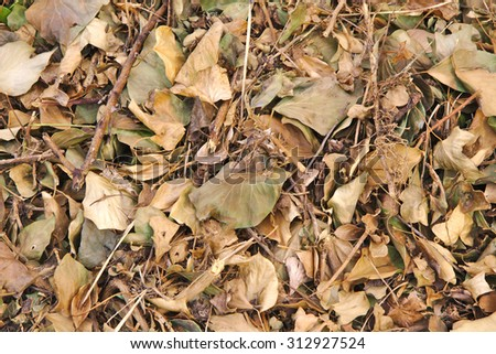 Bed of Autumnal leaves fallen on the ground - stock photo