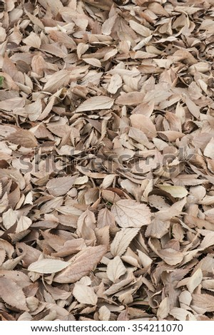 bed of fallen brown leaves under their tree
