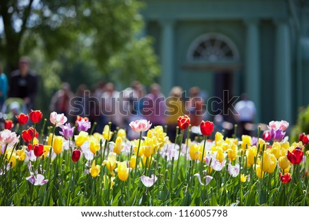 Bed with tulips - stock photo