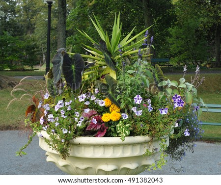 Bedding plant arrangement in a large urn pot