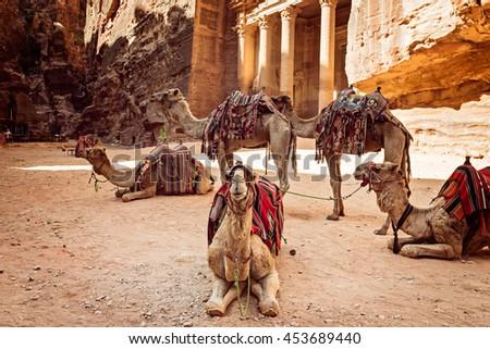 Bedouin camels resting near the treasury Al Khazneh, Jordan, Petra. - stock photo