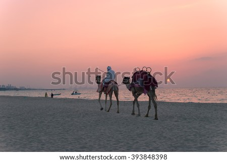 Bedouin with camels on the  Dubai beach at sunset. - stock photo