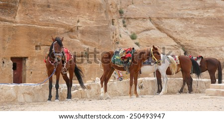 Bedouins horses in Petra,  Jordan-- it is a symbol of Jordan, as well as Jordan's most-visited tourist attraction