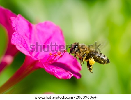 bee and flower - stock photo