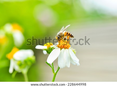 Bee and flower in nature. - stock photo