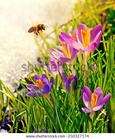 Bee and flowers on a spring day - stock photo