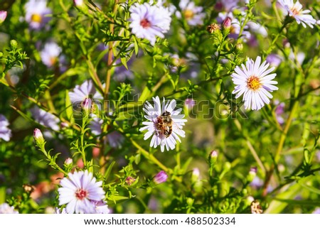 Bee and flowers on green grass background