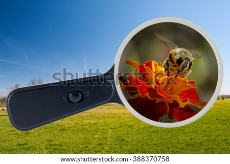 Bee and yellow flower enlarged under the microscope, clipping path - stock photo