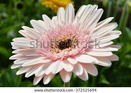 bee are sucking honey from pink flowers. - stock photo
