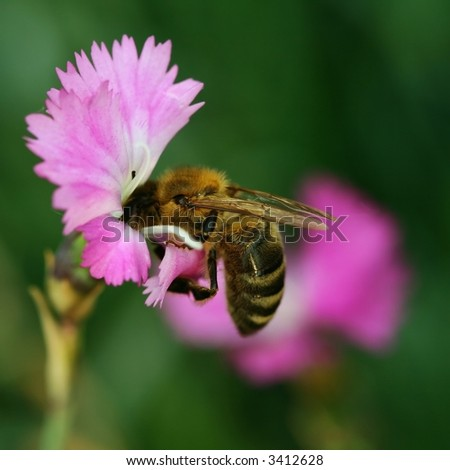 Bee at  work - stock photo