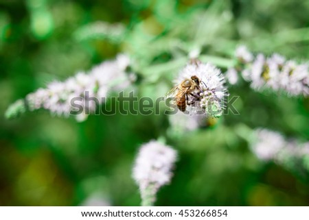 bee at work on white flower collecting pollen - stock photo