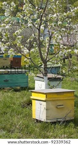 bee beehive - stock photo