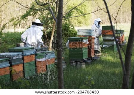 bee beehive hive beekeeper honey nature animal forest field background spring
